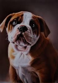 pet portrait painting sus dog
