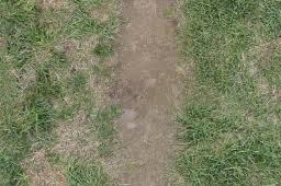 dirt grass texture seamless. Path With Dry Dirt Green Grass Seamless Texture
