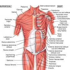 Crystal collectibles for pearl of glass triumph (& bitterpearl your team will spawn into the waking ruins. Chest Muscles Diagram Neck Muscle Anatomy Shoulder Muscle Anatomy Muscle Diagram