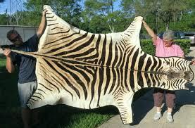 fake zebra skin rug uk real designs detail