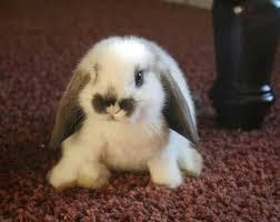 Bunny sooo cute | Bébés animaux mignons, Lapin nain, Créatures ...