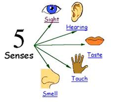 course environmental science topic our senses for each sense we use specific sense organ each of us has 5 sense organs that help us collect information from our surroundings our sense organs include
