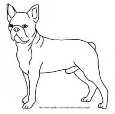 Small Picture Boston Terrier Coloring Page at Coloring Book Online
