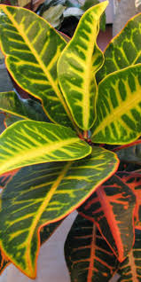 Home Decor Indoor plants, Live Exotic Tropical Plants!