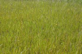 wild grass texture. Wild Grass Field Background | By PICDISK Stock Photo Backgrounds Texture