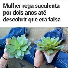 Suculentario - Publicações | Facebook