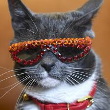 Cat And Jack Sock Size Chart Instagram Star Sunglass Cat The Social Media Sensation With