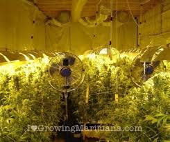 Basement Grow Room Design Beauteous How To Build An Indoor Marijuana Grow Room