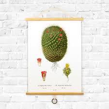 Vintage Botanical Cactus Diagram Curious Prints Touch
