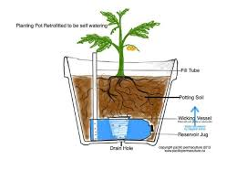 the diy system can turn any kind of pot into a self watering container jesse lemieux pacific permaculture
