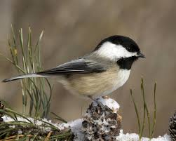 Winter Birds Desktop Screensavers (Page ...