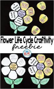 Flowering Plant Life Cycle Craftivity Kindergartenklub