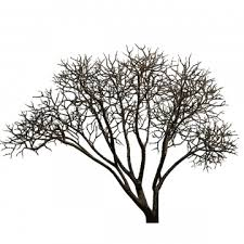 Family Tree Png Images Vector And Psd Files Free Download On Pngtree