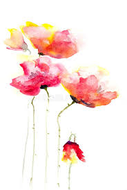 red poppy flowers modern art style watercolor painting stock ilration ilration of card