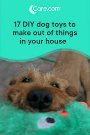 read next 101 things to do with your dog