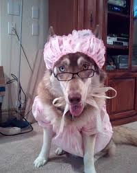 big bad wolf costume for dogs
