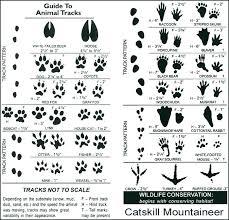 Wild Animal Paw Print Chart Www Bedowntowndaytona Com
