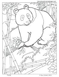 realistic animal coloring pages real animal coloring pages panda coloring zoo animals coloring cute ravens coloring
