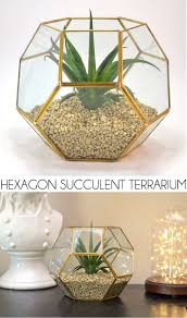 a succulent filed hexagon planter and display is super on point see how to make