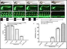 Identification Of Mundoserone By Zebrafish In Vivo Screening