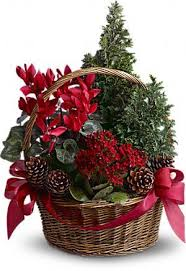 Plant Gifts For Christmas  Christmas Gift IdeasChristmas Gift Plants