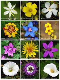 Flower Species Chart Flower Wikipedia