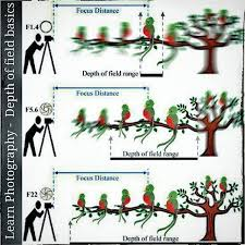 Photography Depth Of Field Chart Learn Photography Depth Of Field Basics Its Ws Nice Chart