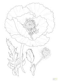 pretty coloring pages. Simple Pages Poppy Flower Coloring Page Pretty Color Pages Poppies To Print Flowers Cal63 With Pretty Coloring Pages E
