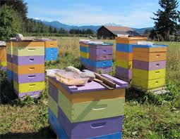 Image result for honey bee hives images