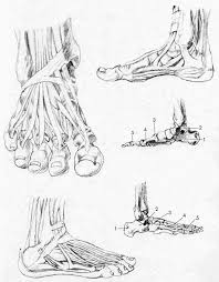 Bone Drawing Easy Simplified Anatomy References Pinterest Figure