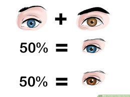 Eye Dominance Chart How To Predict Your Babys Eye Color 12 Steps With Pictures