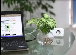 feng shui plant office. feng shui plant in office s