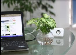 office feng shui plants. Feng Shui Plant In Office Plants S