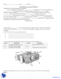 cell membrane coloring application of biology assignment the document