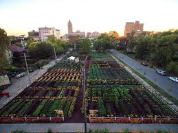 michigan urban farming initiative garden