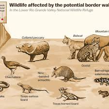 Wildlife Movement Chart Trumps Border Wall Is An Ecological Disaster Vox