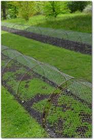 chicken wire fence ideas. Chicken Wire Fence Covering Vegetable Garden Chicken Wire Fence Ideas