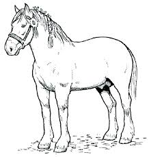 Horse Coloring Pages Breyer Free In Online Barbie Horses Spirit