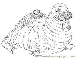 Small Picture Mural Tsb Walrus Mother And Pup Reverse Coloring Page Free