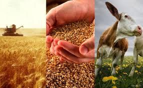 Курсовая Себестоимость сельскохозяйственной продукции резервы и  Курсовая Себестоимость сельскохозяйственной продукции резервы и пути ее снижения на примере ОАО