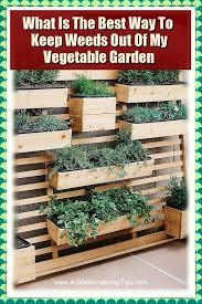growing vegetables vegetable garden