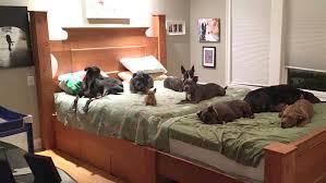 Loving Family Bedroom Furniture Dog Bedroom Furniture Dog Stairs Beds Bedroom Modern Barcelona Bed