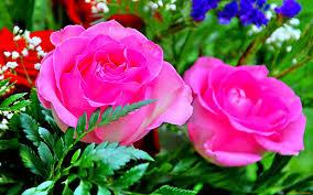 flower wall paper download best 20 beautiful hd rose flowers wallpaper photos