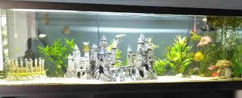 fascinating diy aquarium decor of ideas ideas ideas