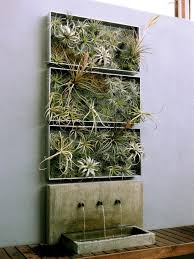 home decor ideas plants air plant airplantman on live plant wall art