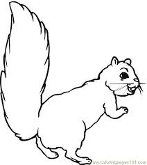 Squirrel 9 Coloring Page Free Squirrel Coloring Pages