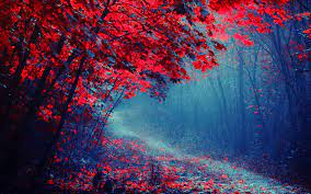 Wallpaper Red Leaves Forest, Road ...