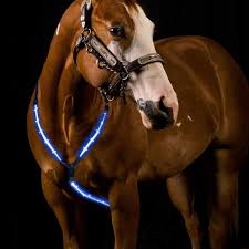 Light Up Horse Breast Collar Amazon Com Petacc Led Horse Breastplate Collar