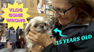 ADOPTING A 15 YEAR OLD DOG FROM PETSMART - YouTube