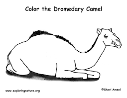 Small Picture Camel Dromedary Coloring Page